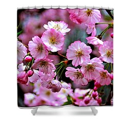 The Delicate Cherry Blossoms Shower Curtain