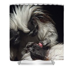 Shower Curtain featuring the photograph The Dentist by Lisa L Silva