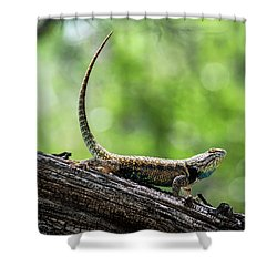 Shower Curtain featuring the photograph The Desert Spiny Stance  by Saija Lehtonen