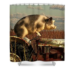 The Dream Of A Pig Shower Curtain