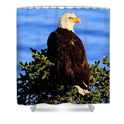 The Eagle Has Landed 2 Shower Curtain