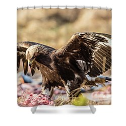 The Eagle Have Come Down Shower Curtain by Torbjorn Swenelius