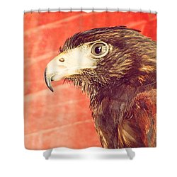 The Eagle Shower Curtain by Pedro Venancio