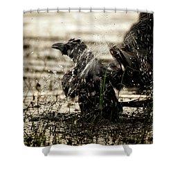 The Eastern Jungle Crow Corvus Macrorhynchos Levaillantii Shower Curtain