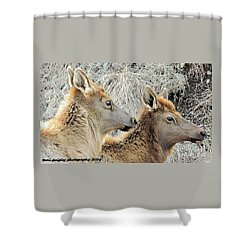The Elk Of Winter  Shower Curtain