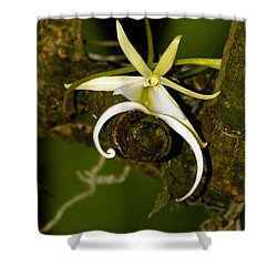 The Elusive And Rare Ghost Orchid Shower Curtain