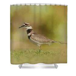 The Elusive Killdeer Shower Curtain by Jai Johnson
