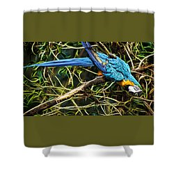 Shower Curtain featuring the photograph The Enchanted Forest by Cameron Wood