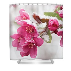 Shower Curtain featuring the photograph The End Of Winter by Ana V Ramirez