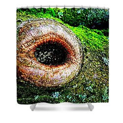 The Eye In The Tree Shower Curtain