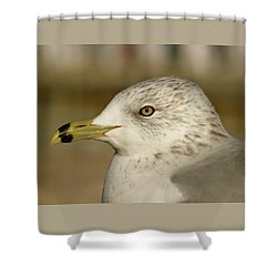 The Eye Of The Seagull Shower Curtain