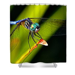 Shower Curtain featuring the photograph The Face Of A Dragonfly 003 by George Bostian