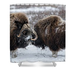 The Face Off  Shower Curtain