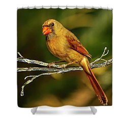 The Female Cardinal Shower Curtain