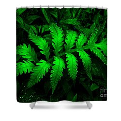 Shower Curtain featuring the photograph The Fern by Elfriede Fulda
