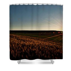 Shower Curtain featuring the photograph The Field Of Gold by Mark Dodd