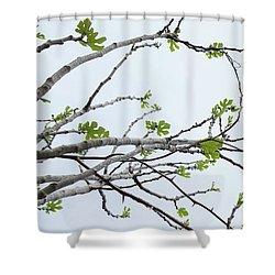 The Fig Tree Budding Shower Curtain by Yoel Koskas