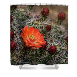 Shower Curtain featuring the photograph The First Bloom  by Saija Lehtonen