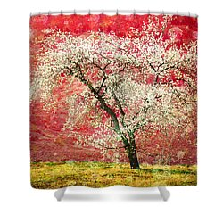The First Blossoms Shower Curtain by Tara Turner