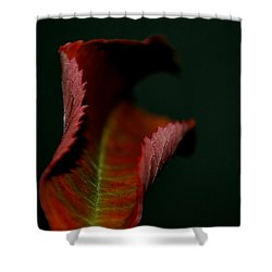 Shower Curtain featuring the photograph The First Day Of Fall by Marija Djedovic
