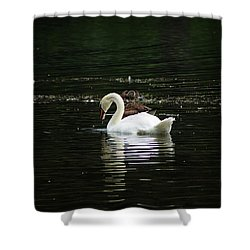The Fishers Shower Curtain
