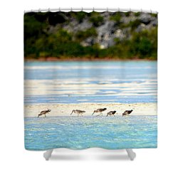 The Five Sandpipers Shower Curtain