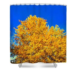The Flare Of Fall On A Clear Day Shower Curtain