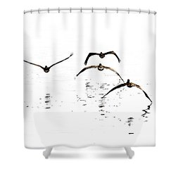 The Flight Of The Pelicans  Shower Curtain