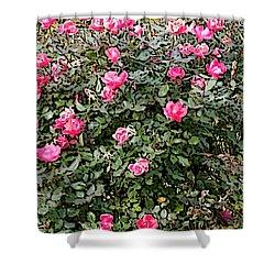 Rose Bush Shower Curtain by Skyler Tipton