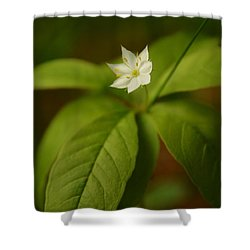 The Flower Of The Dark Woods Shower Curtain