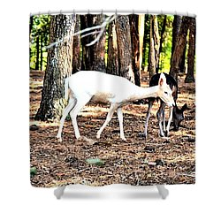 The Forest And The Deer Shower Curtain