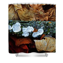 Shower Curtain featuring the photograph The Forest Floor - Cascade Wi by Mary Machare