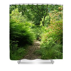 The Forest Path Shower Curtain