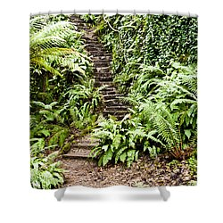 The Forest Stairwell Shower Curtain by Rae Tucker