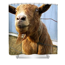The Friendly Goat  Shower Curtain