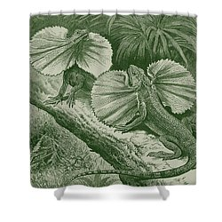 The Frilled Lizard Shower Curtain