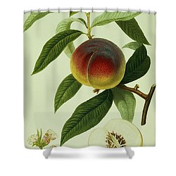 The Galande Peach Shower Curtain by William Hooker
