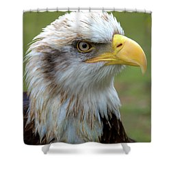 The Gaurdian Shower Curtain by Stephen Melia