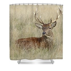 Shower Curtain featuring the photograph The Gentle Stag by LemonArt Photography