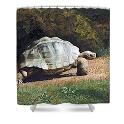 The Giant Tortoise Is Walking Shower Curtain