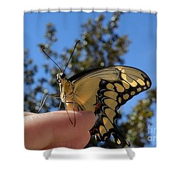 The Glorious Swallowtail  Shower Curtain