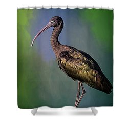 The Glossy Ibis Stroll Shower Curtain