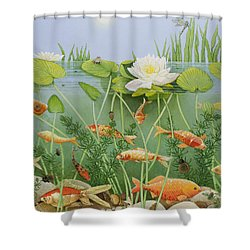 The Golden Touch Shower Curtain