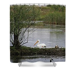 Shower Curtain featuring the photograph The Goose And The Pelican by Alyce Taylor