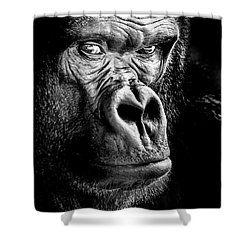 The Gorilla Large Canvas Art, Canvas Print, Large Art, Large Wall Decor, Home Decor Shower Curtain by David Millenheft