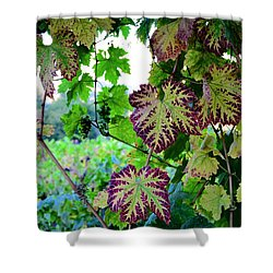 The Grape Vine Shower Curtain by Corinne Rhode