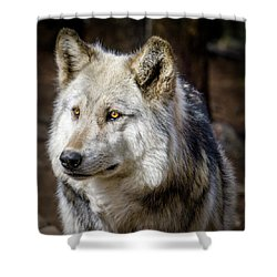 Shower Curtain featuring the photograph The Gray Wolf by Teri Virbickis