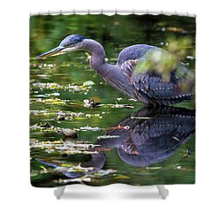 The Great Blue Heron Hunting For Food Shower Curtain by David Gn