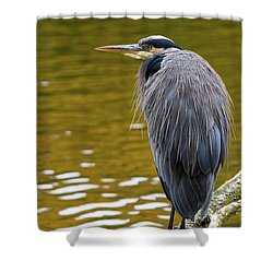 The Great Blue Heron Perched On A Tree Branch Shower Curtain by David Gn