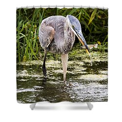 Shower Curtain featuring the photograph The Great Blue Heron by Ricky L Jones
